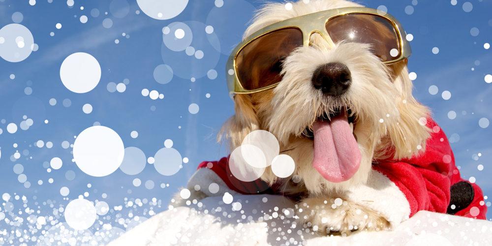 Christmas_Dogs